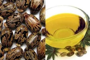 Castor oil is remedy for foot corns