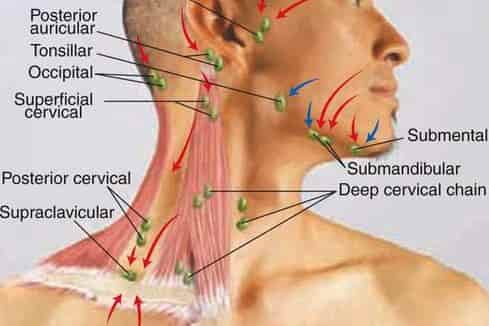 lymph node locations in head, ear, neck, chest, back, arms, armpit, Human Body